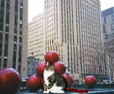 Mooch and Ornaments
